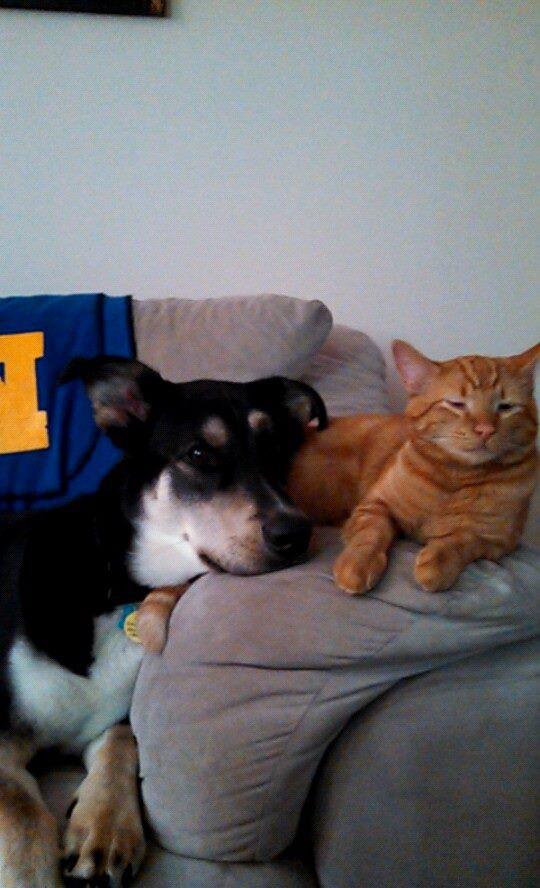 Jax and Milo