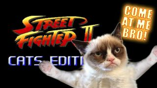 Street Fighter: Cats Edition - Marca Blanca